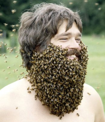 bee-beard%20England.jpg